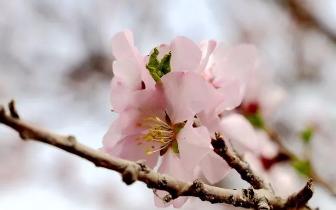一起来莎车  邂逅美丽的春天