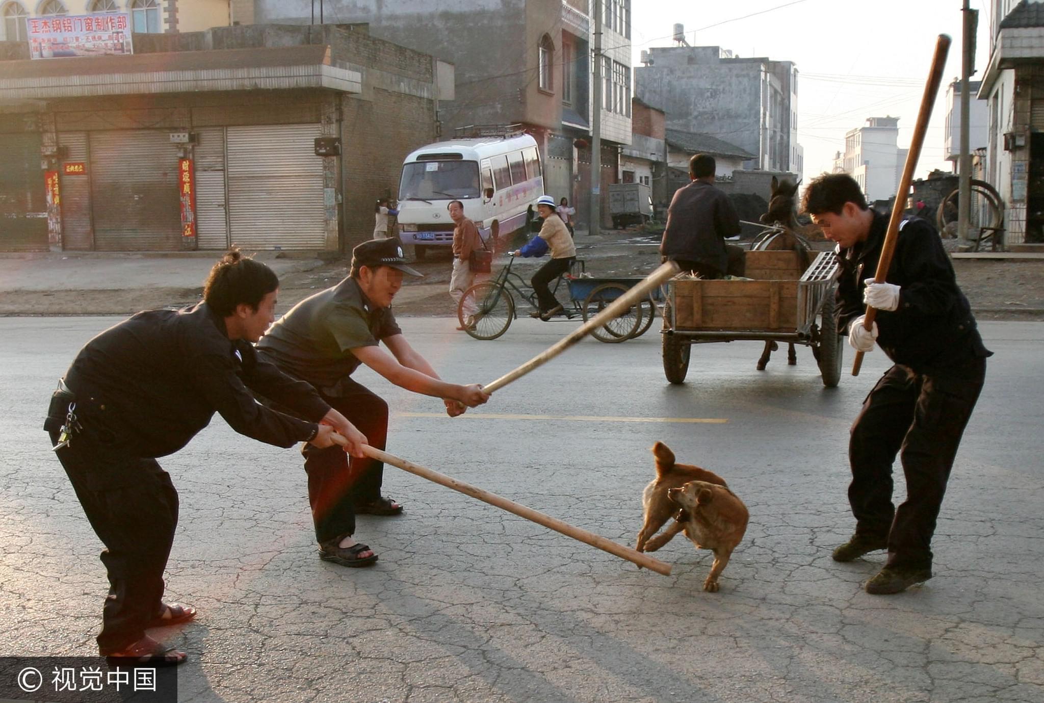2006年4月25日,云南罗平县为建设成为国家级卫生县城,全城捕杀流浪狗/视觉中国