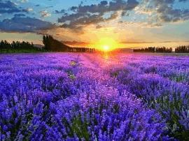 伊犁:一年四季鲜花盛开的美丽天堂