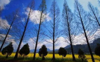 中国有一种美叫春天里的歙县 美得像名画