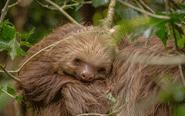 动物睡觉时好像在微笑
