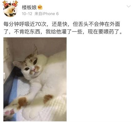网红猫楼楼去世,为何68万粉丝为它痛哭落泪?