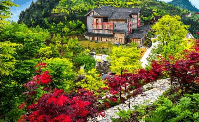 重庆主城也能看彩叶 现在正值最佳观赏季!