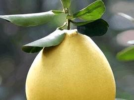 中国新经济成长力量 平和蜜柚入选双百强