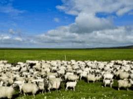 """畜牧业产业互联网应用案例-""""爱养牛""""平台介绍"""