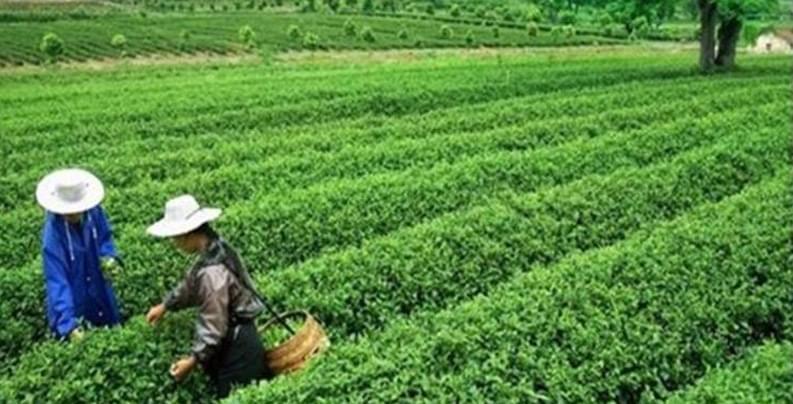 海南将建茶旅产业小镇 百名专家齐聚保亭建言献策
