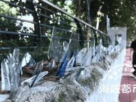 福州江滨西大道小区人行道旁矮墙插满玻璃碴