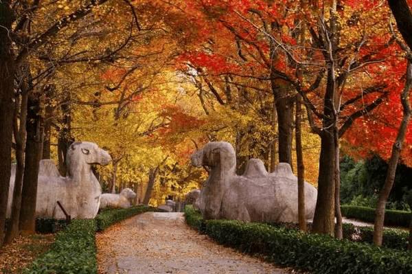 百名日本游客 来南京赏金秋美景