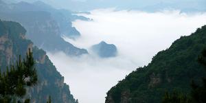 """王莽岭现""""云海""""   最高海拔1700余米"""
