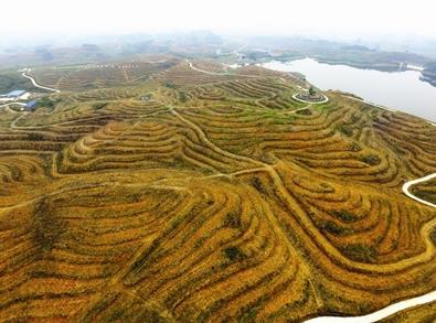 罗城今年计划新种油茶3.2万亩 脱贫致富