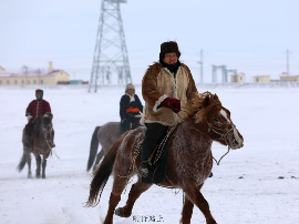 冬日里的蒙古马 叱咤风云在呼伦贝尔草原上