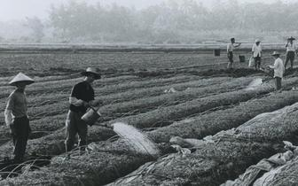 琼海巨变30年:90年代生产场景