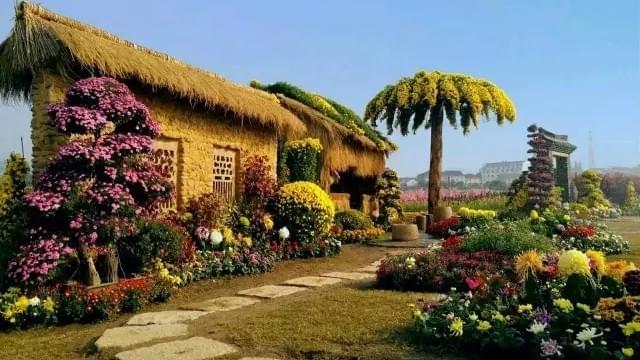 有个海宁人用800种菊花打造世外桃源