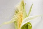 玉米须的作用有不少 治疗糖尿病是良药