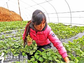 垣曲县古堆村女青年返乡创业 年收入可达6万多元
