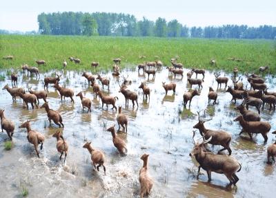 """石首全力推进湿地生态保护与建设 打造""""绿色水乡"""""""