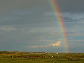 新疆哈巴河:彩虹牧歌美如画