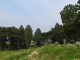 """方城林业局多举措抓好""""三秋""""期间林木管护工作"""