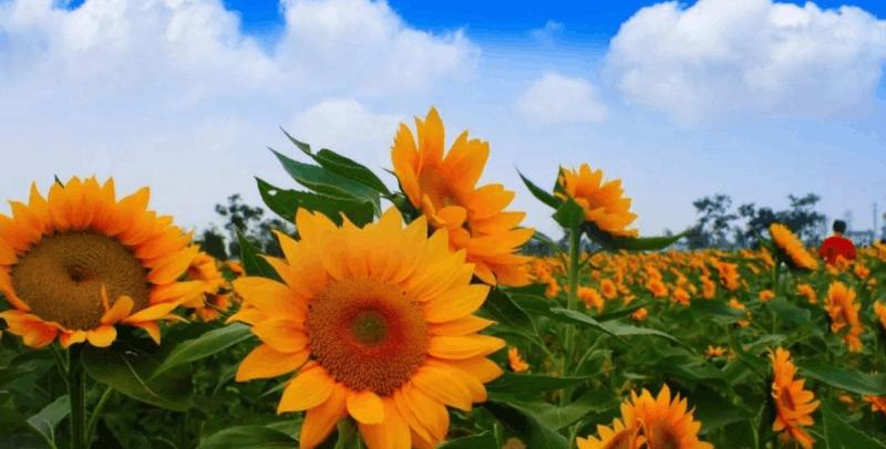 湖北将新增6家4A级景区 利川玉龙洞旅游区上榜!