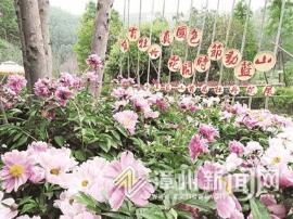 漳州长泰:十里蓝山景区将举办首届牡丹花展