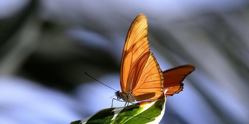 美国动物园30多种蝴蝶丛林起舞 持续至4月15日
