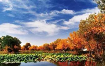 泽普金湖杨 四季景色各不同 美成一幅画卷!