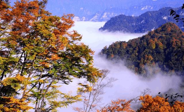 重庆出发︱赏尽秋天的多姿绚丽彩林