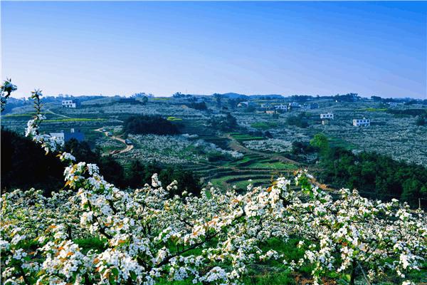 春天来了 重庆百余条赏花线出炉