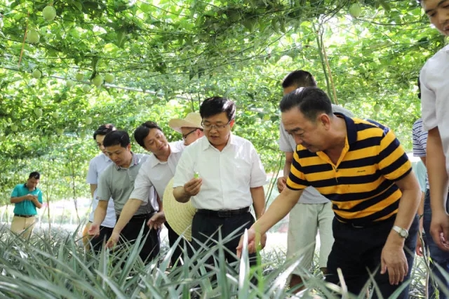 市委副书记李伦兵到合浦县指导脱贫攻坚工作
