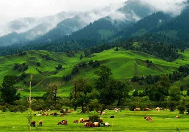 那拉提草原,我的心灵憩息地