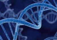 美国不监管基因编辑技术培育出的农作物?误解了