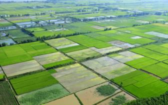 闽将实行永久基本农田特殊保护 从5方面明确规定