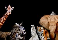 造福万世,这个项目打算测序所有动植物物种的DN