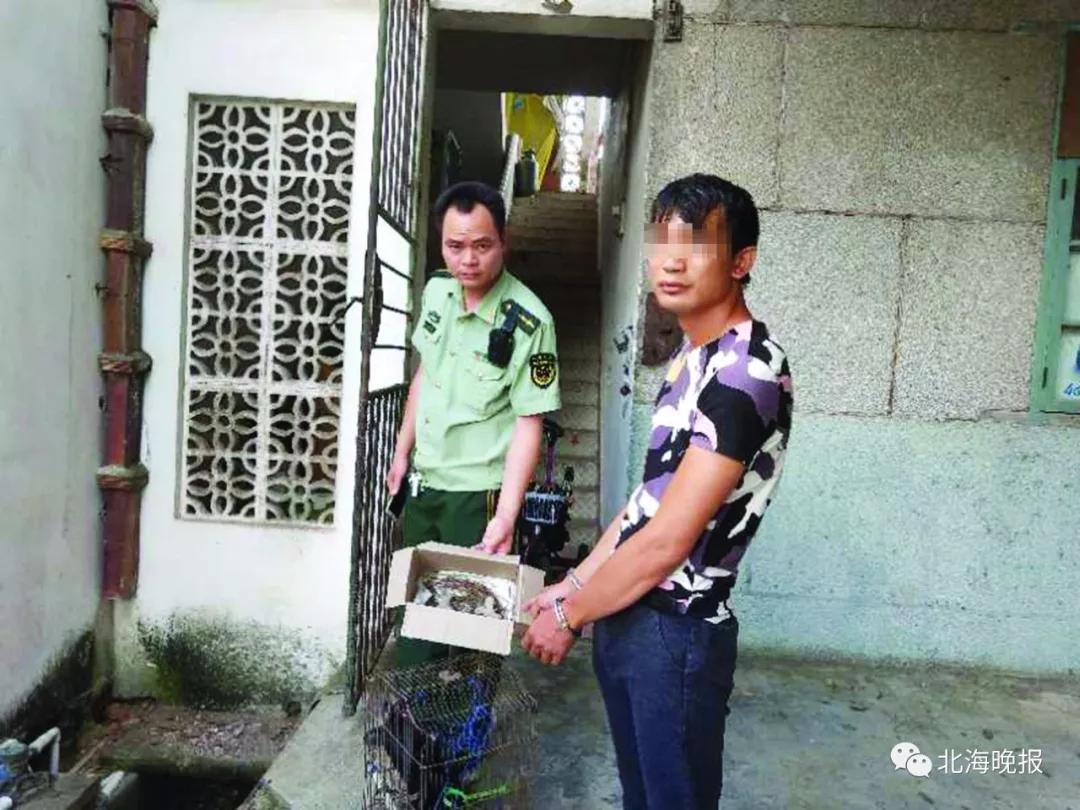 合浦一男子网上兜售疑似猛禽雏鸟 不久后被抓