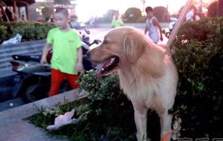 """创建全国文明城市:遛狗,请不要让文明""""溜走"""""""