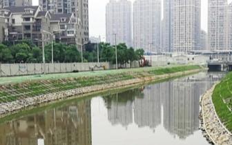 """截污造景""""双管齐下"""" 浦上河沿岸景观设计已完成"""
