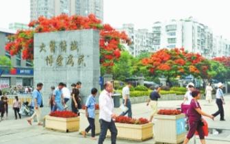 """省人民医院门口 凤凰木""""红""""了"""