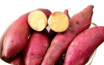 红薯别再煮着吃了! 这样的做法才是孩子的最爱既美味又