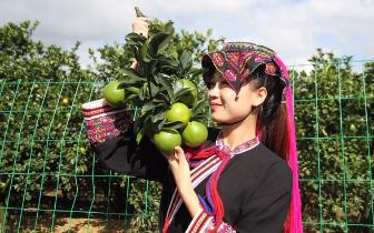 海南琼中加大产业扶贫力度 特色农产品促农增收