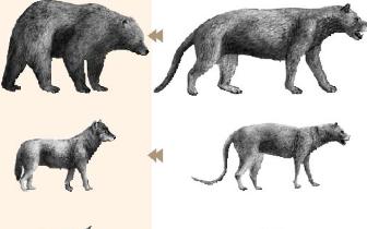 新疆乌伦古河流域发现多种犬熊科化石