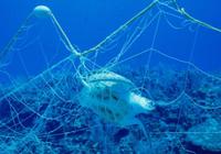"""科学家为渔民开发""""神器"""":捕鱼时能避开保护动物"""