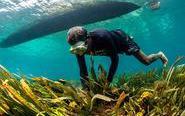 走进东帝汶的水下世界