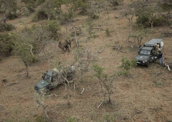 在非洲,高科技成了应对致命偷猎大战的最后武器