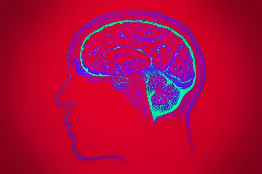 """自然界那么大 为何唯独""""人""""进化出如此强悍的大脑"""