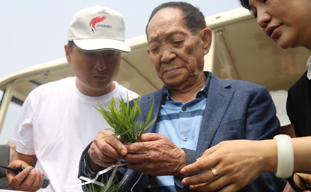 袁隆平海水稻团队与农村淘宝成立亩产一千美金研究院