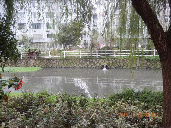 台州小学生写信反映水污染 市委书记批示:立即核实