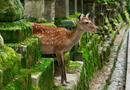 日本动物合影的地方