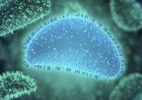 香港大学发现有效对抗流感病毒的新方法