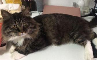 男子晒出朋友家的宠物猫 没想到笑喷网友