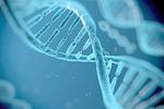 BRCA基因突变可致女性癌症